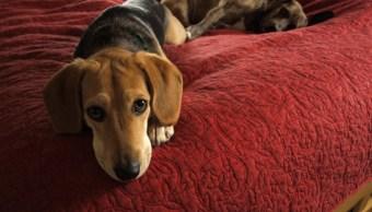 Razones dejara dormir cama con mascota