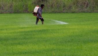 La Cofepris informó que reforzará las medidas para combatir el comercio ilegal de plaguicidas