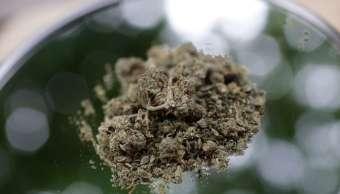 SCJN concede amparo para importar semillas de marihuana
