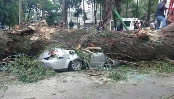 Caída de árbol en Naucalpan deja 4 muertos