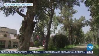 Árboles Riesgo Caer Valle De México CDMX