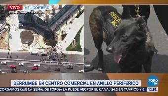 Binomios caninos revisan plaza Artz Pedregal tras derrumbe