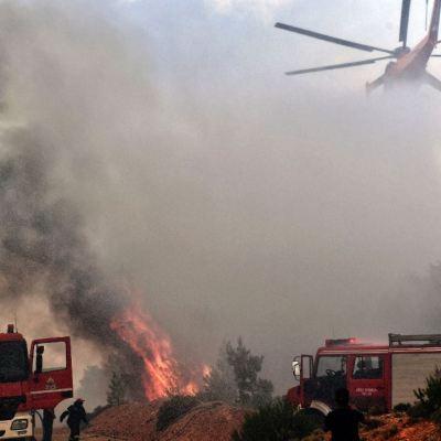 Ola de calor provoca sequías e incendios forestales en Europa