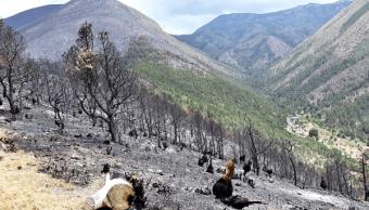 incendios forestales destruyen coahuila matorrales arbolado