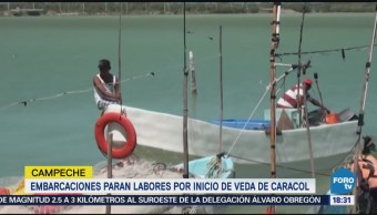 Decretan Veda De Caracol Campeche Proteger Especie