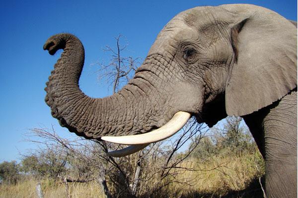 Elefante mata niño 8 años venganza tirarle piedras