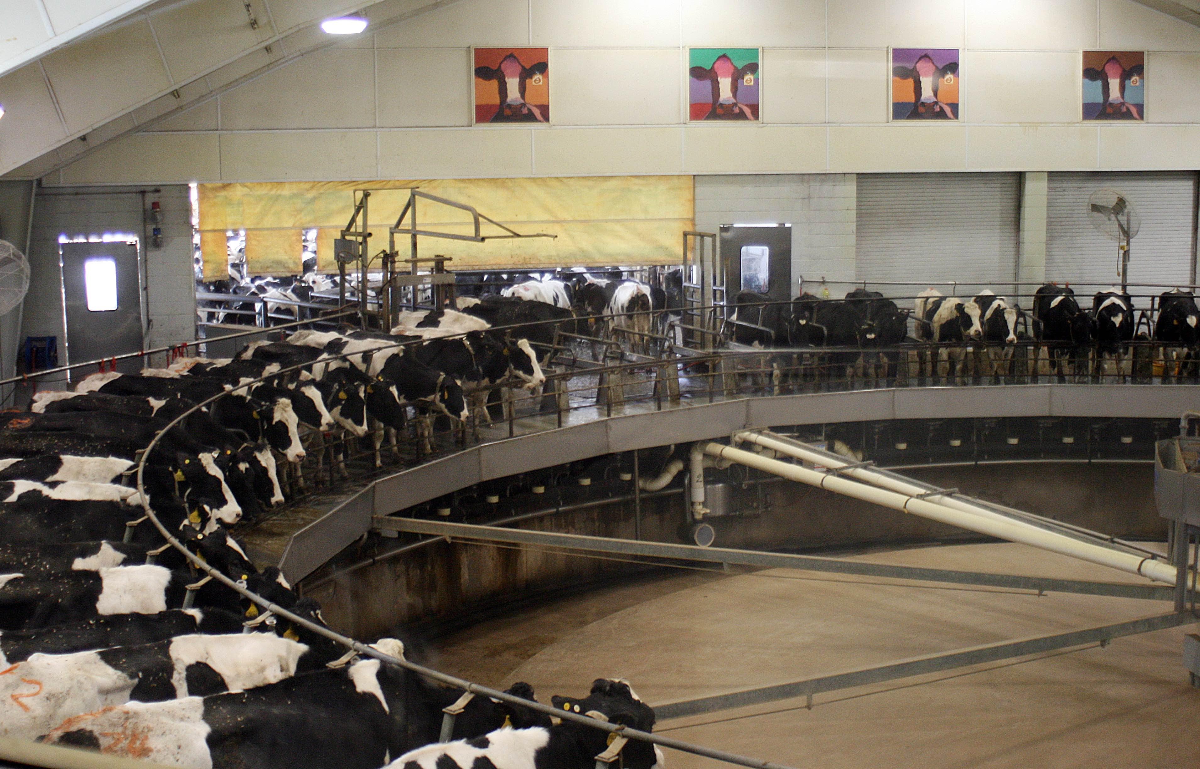 industria-leche-queso-vacas-fabricas-calentamiento-global-contaminacion