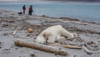 Matan A Tiros Oso Polar Noruega, Matan Oso Polar, Noruega, Osos Polares, Oso Polar, Matan