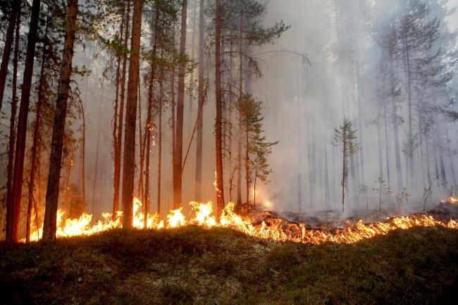 ola de incendios azota a suecia