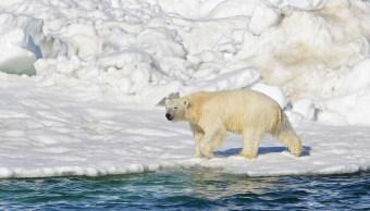 Oso Polar Ataca Hombre Canadá, Oso Polar Asesina Padre, Ataque Oso Polar, Aaron Gibbons, Nunavut, Canada,