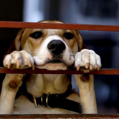 Eliminan sacrificio de perros en este municipio