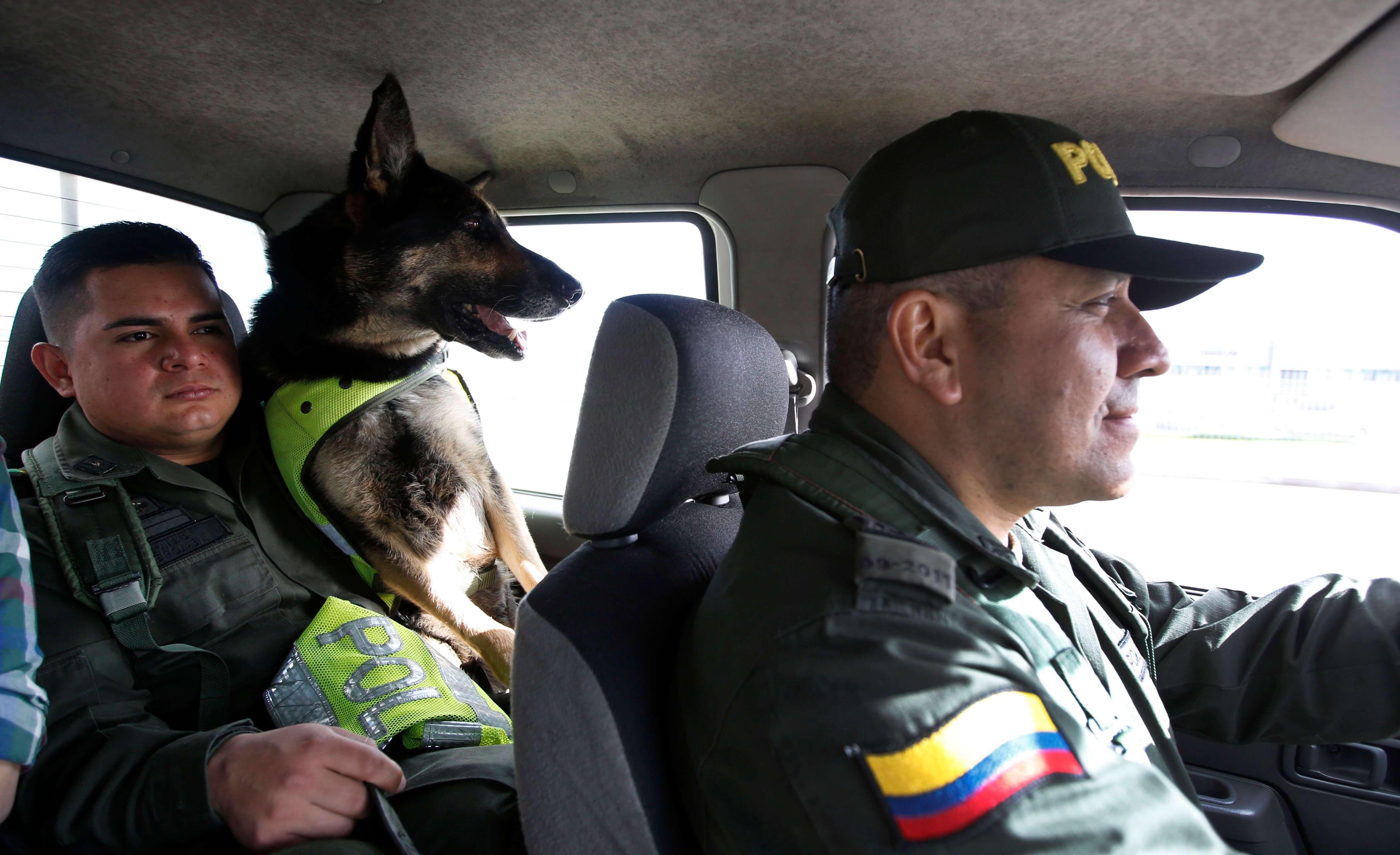 Narcos de Colombia ponen precio a cabeza de perra policía