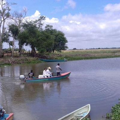 Tras muerte de manatíes en Tabasco, denuncian daños en salud de pobladores
