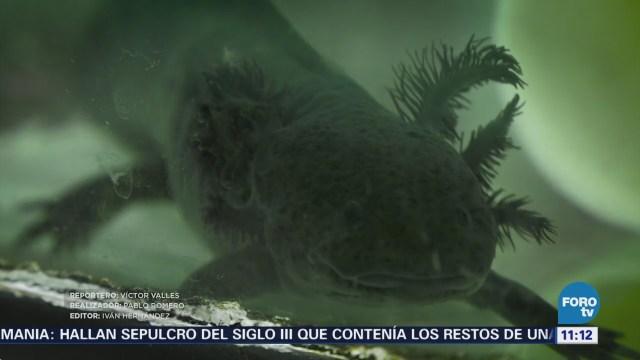 endémica en México en peligro de extinción