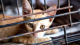 Albergue en Indiana mata gatitos congelándolos