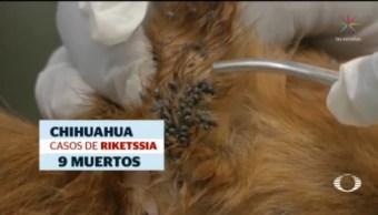 Alertan Aumento Contagios Rickettsia Parques Garrapatas