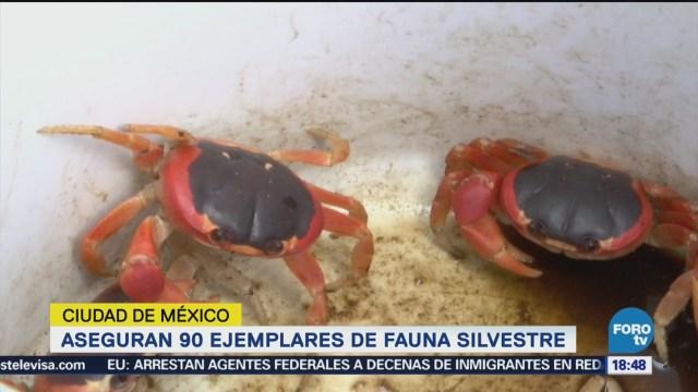 Aseguran 90 Ejemplares Fauna Cdmx Durante Un Operativo Autoridades De La Cdmx Decomisaron Fauna Silvestre Mercado De La Colonia Morelos