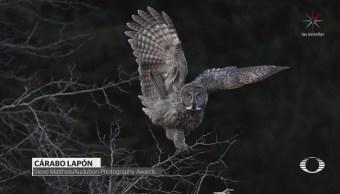 Aves De Fotografía Ganadoras Asociación Audubon