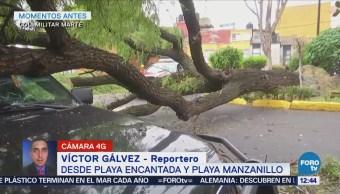 Cae árbol sobre vehículo en la CDMX