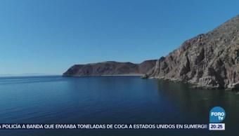 Colapsan especies del Mar de Cortés
