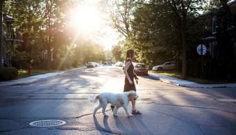 Con ADN de popó de perro localizarán a dueños irresponsables