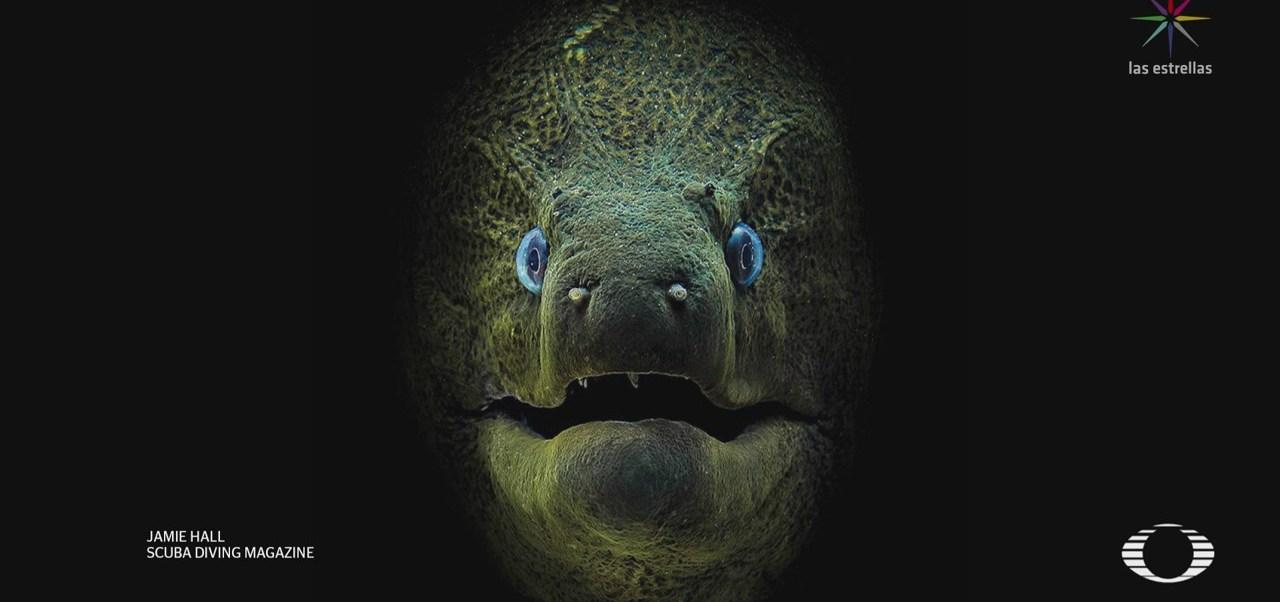 Concurso subacuático de fotografía, organiza Scuba Diving