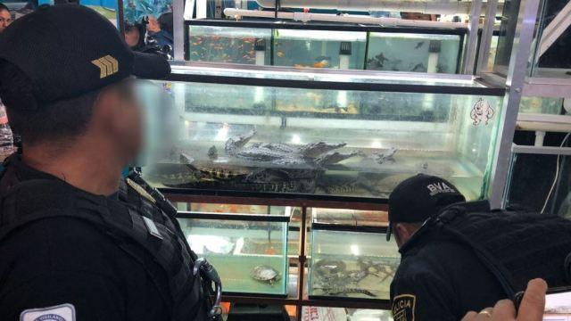 Decomisan iguanas, tortugas y cocodrilos en mercado