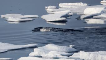 Efecto invernadero ocasiona que calor se almacene en océanos