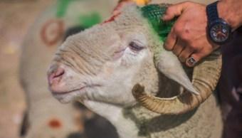 Musulmanes celebran la 'Fiesta del Cordero'