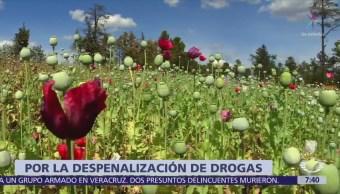 Gobierno AMLO planteará pauta a ONU para despenalizar marihuana y amapola