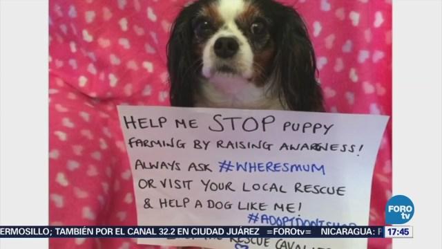 Implementan Ley Protección Cachorros Gran Bretaña
