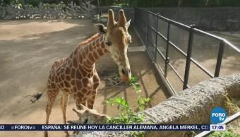Alimentación Animales Zoológico Chapultepec CDMX Dieta