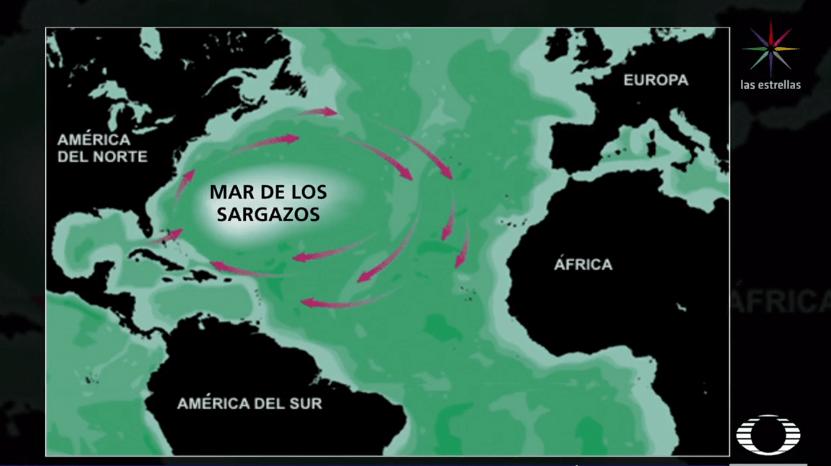 Sargazo en Cancún podría extenderse hasta octubre, informa Semarnat