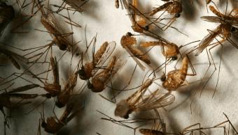 Virus del Nilo ha dejado tres muertos en Israel