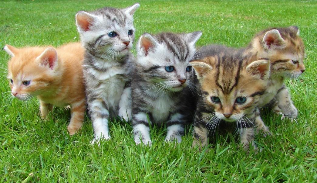 Trabajo cuidando gatos en isla griega | Noticieros Televisa
