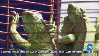Operativo contra venta ilegal de animales en Mercado Morelos