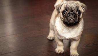 fotos-de-perros-personas-toman-mas-fotos-de-sus-perros-que-de-sus-esposas-estudio