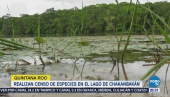 Realizan censo de especies en el lago de Chakanbakán