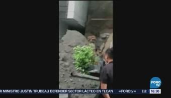 Reportan Derrumbe Bosques Lomas