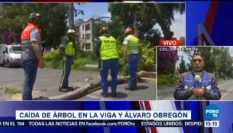 Retiran Árbol Caído Calzada De La Viga Delegación Iztacalco