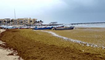 Sargazo no afecta llegada de turistas al Caribe mexicano, dice titular de Sectur