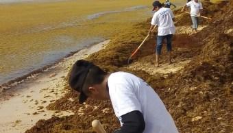 Senado analiza opciones para contener el sargazo en playas del Caribe