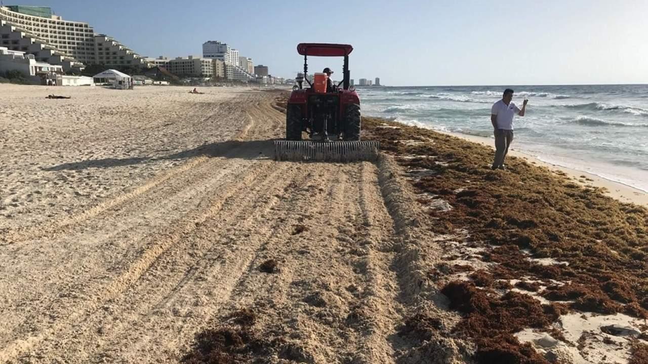Sargazo en Cancún; recolectan 140 mil toneladas
