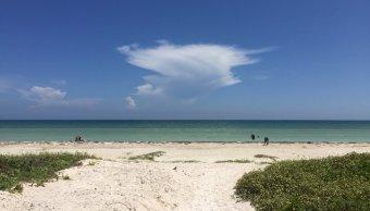Sargazo es retirado de las playas de Yucatán