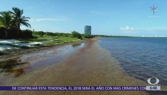 Sargazo invade el Caribe mexicano