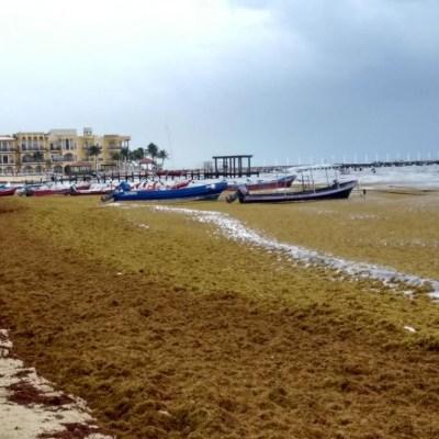 Senadores solicitan a AMLO órgano para erradicar sargazo de playas del Caribe