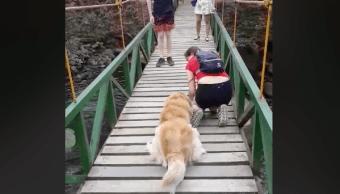 Perro teme Cruzar Puente Dueña Enseña
