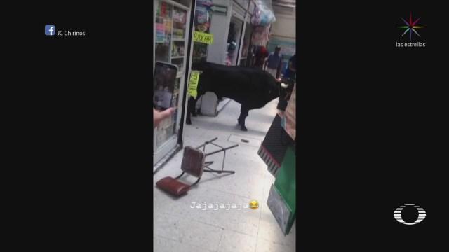 Toro de la 'Tlatenconada' sorprende a habitantes