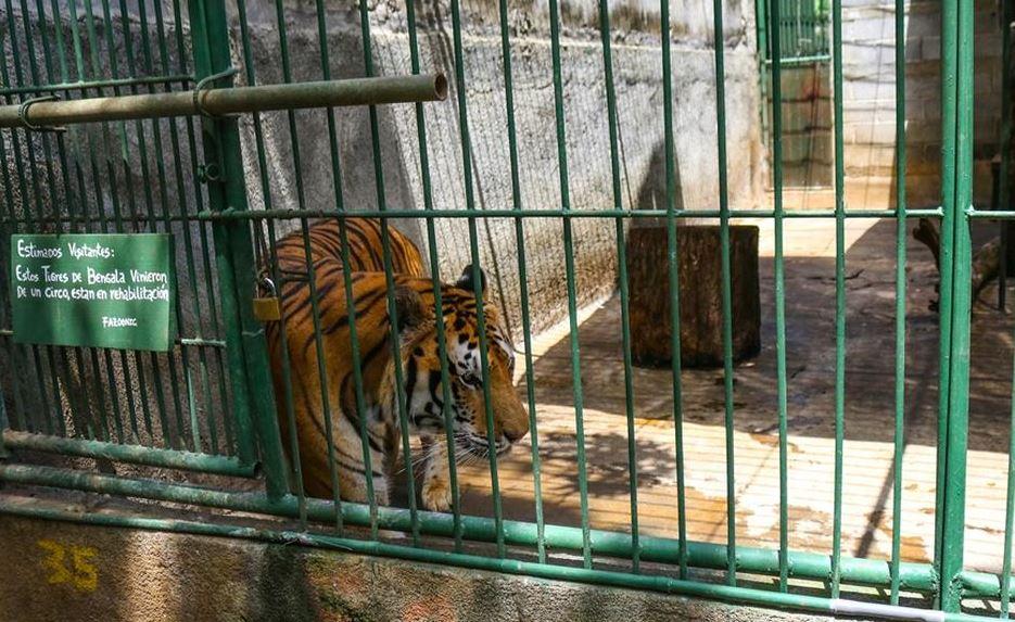 Crisis política afecta al principal zoológico de Nicaragua