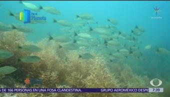 Activistas trabajan para conservar biodiversidad del Mar de Cortés